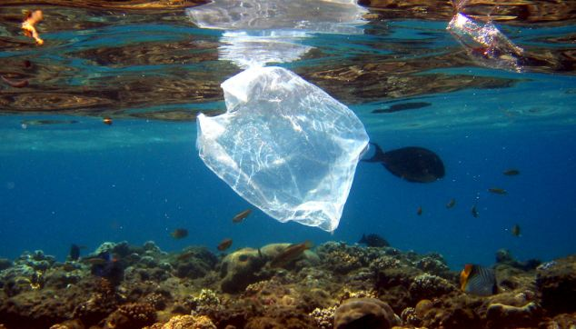 Egypt - Pollution - Plastic bag along a coral reef