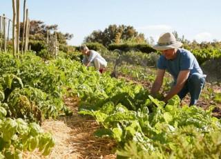 odrziva poljoprivreda